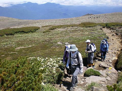 固有種の高山植物も多く咲く大雪山の稜線もひぐま大学のフィールド