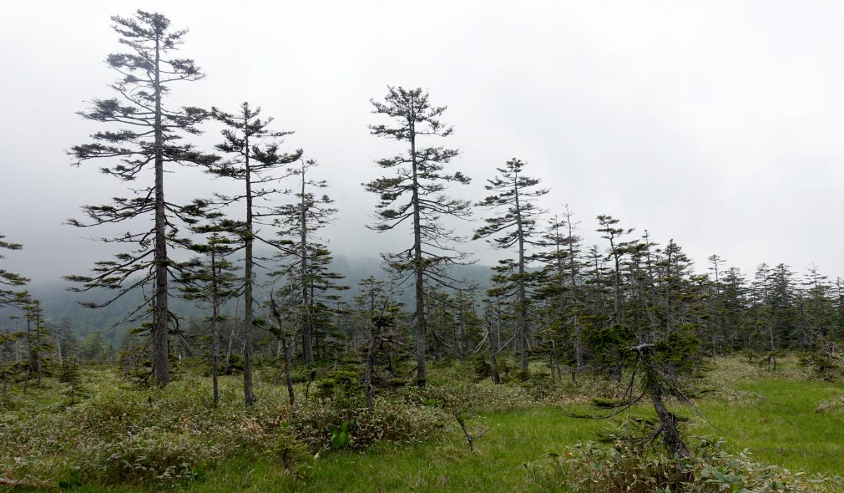 ひぐま大学 第2講座 富良野岳の山裾に広がる森と高層湿原を訪ねて原始が原へ