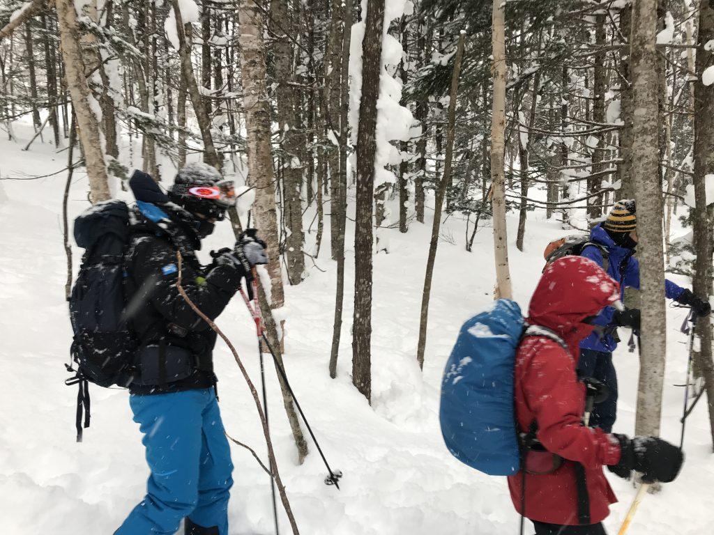 2019-02-17 ひぐま大学湯内山写真02 低標高でダケカンバ
