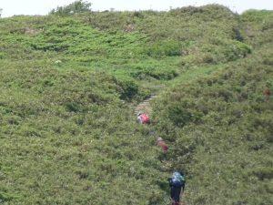 笹の谷間を登高