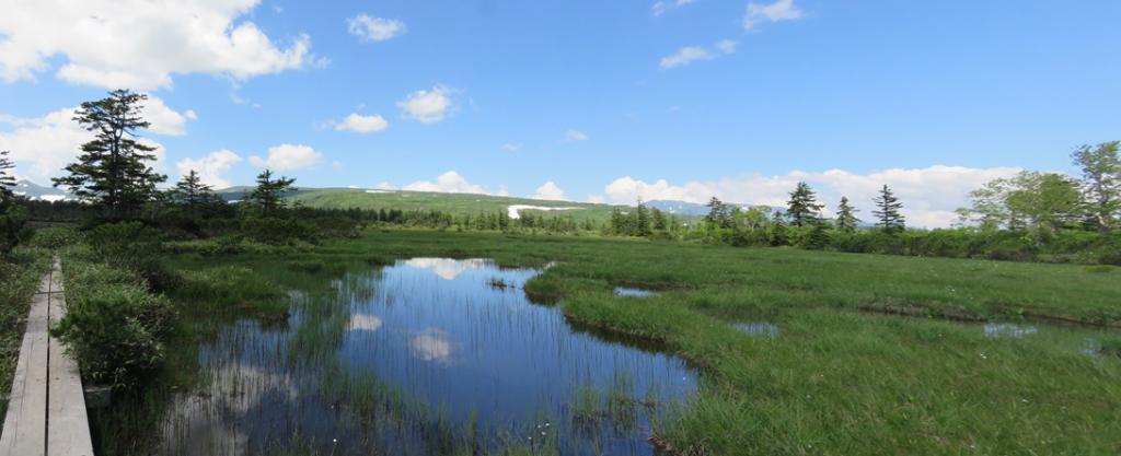 第3講座 沼の原08主脈 2020-07-19